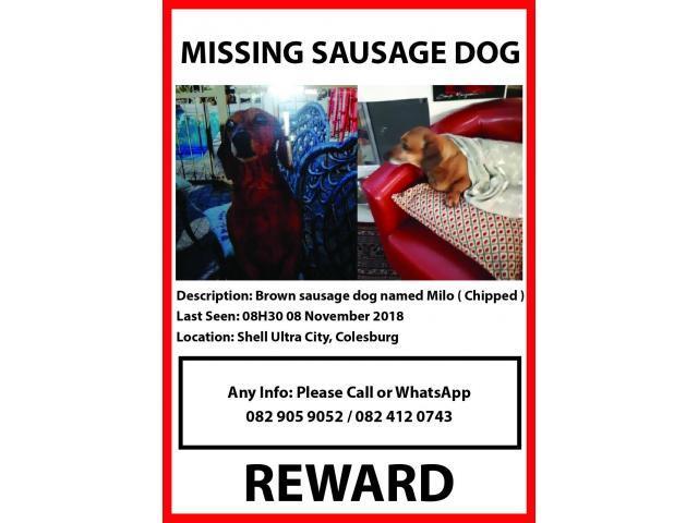 MISSING DACHSHUND (SAUSADE DOG) AT SHELL ULTRA CITY