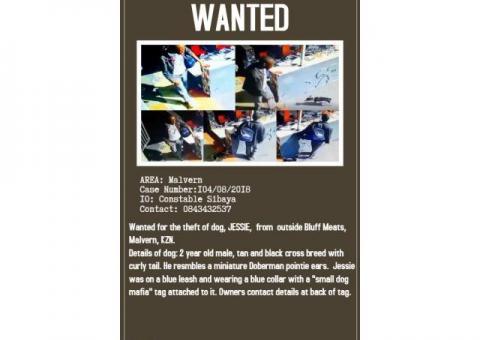 Jesse James missing