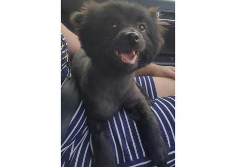 Dog found in Faerie Glen