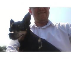 Found a dog running into Rochester Strubens Valley