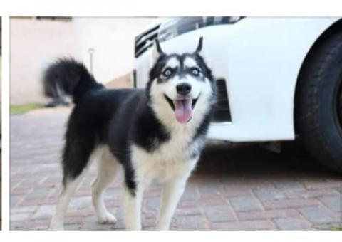 Lost Dog in Stonehenge Nelspruit