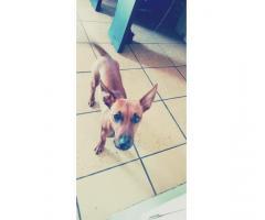 Missing baby! (Nala)