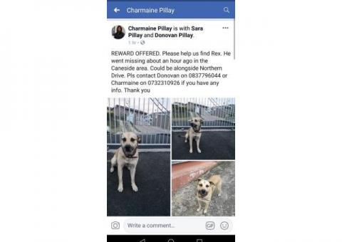 Reward offered for Missing Dog - Caneside Phoenix