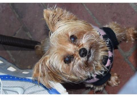 LOST: Gina missing from Briza Road