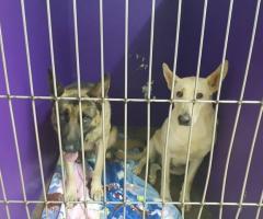 Found Dogs Randburg