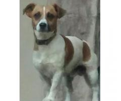 Missing Jack Russle called London
