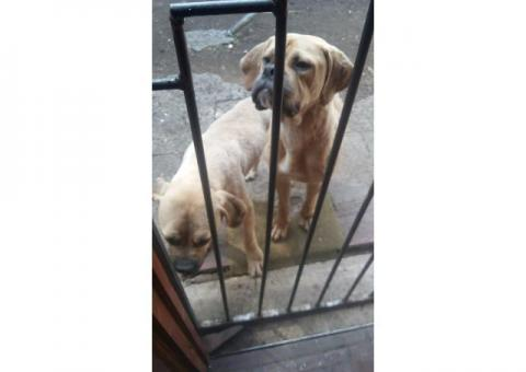 REUNITED and back home!  -  PLEASE HELP ME FIND MY 2 DOGS