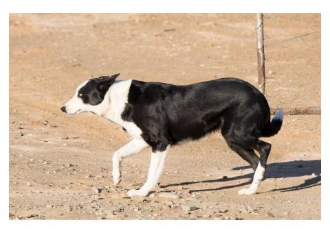 Sheep dog mother and son missing from Northern Cape town since 2 September 2019